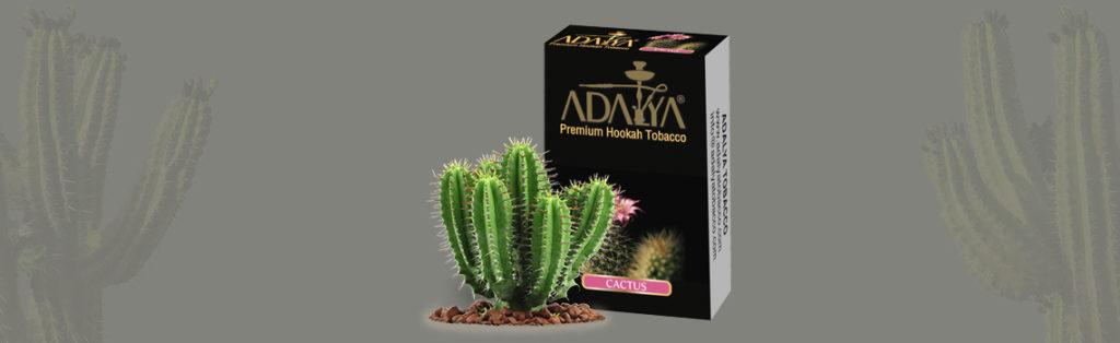 Cactus Адалия топ 10